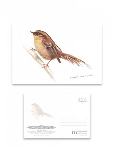 Postal Rayadito